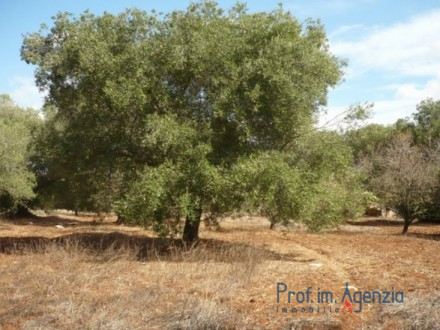 A beautiful land cultivated with old centuries olive grove
