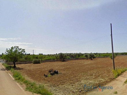 Beautiful plot of land cultivated with olive grove and almond trees