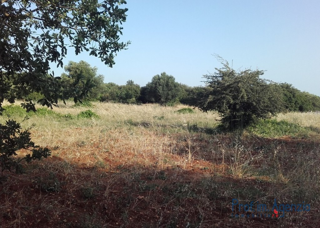 Sale Land plots with centuries-old olive groves Carovigno - Plot of land with centuries-old olive grove Locality Agro di Carovigno