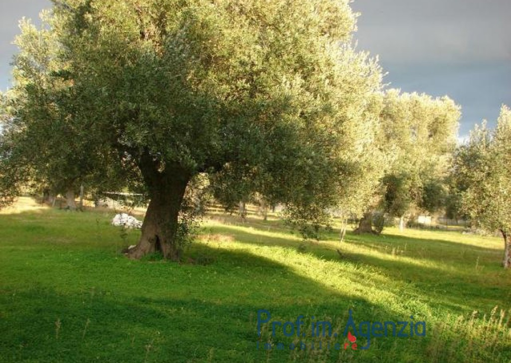 Sale Country houses Carovigno - Great villa elegantly furnished Locality Agro di Carovigno