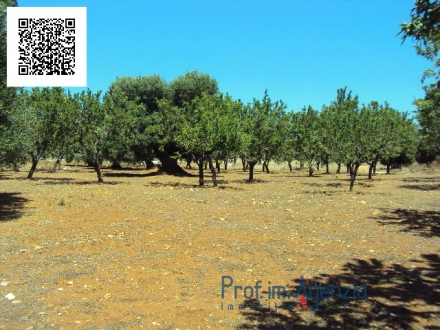 Beautiful plot of land sea view with old-centuries olive grove
