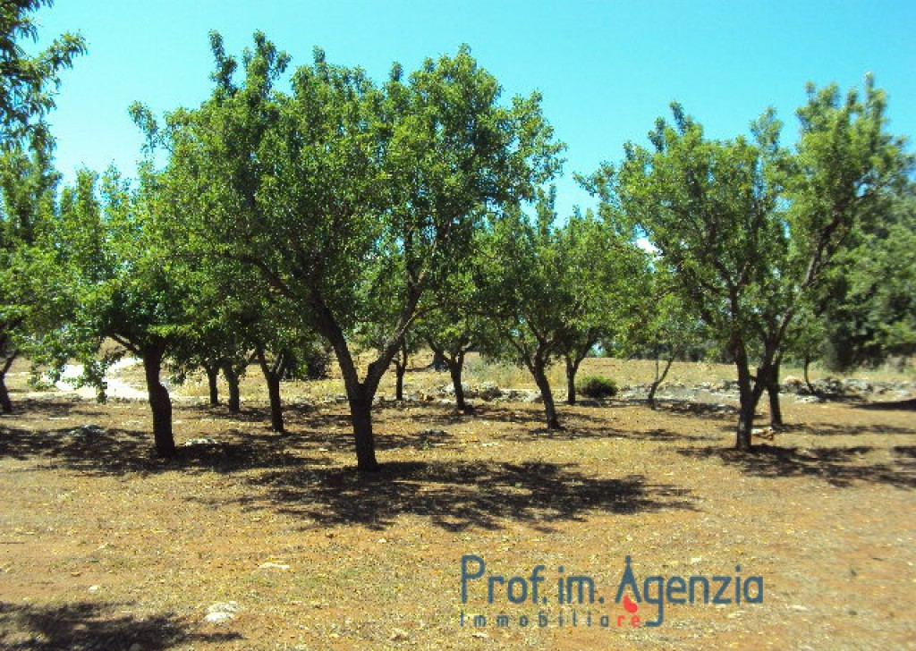 Sale Sea view plots of land Carovigno - Beautiful plot of land sea view with old-centuries olive grove Locality Agro di Carovigno