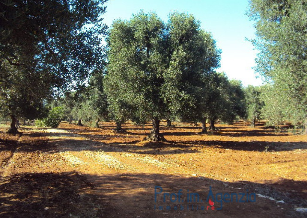 Sale Land plots with centuries-old olive groves S. Vito dei N. - Plot of land planted with centuries-old olive grove Locality Agro di San Vito dei Normanni