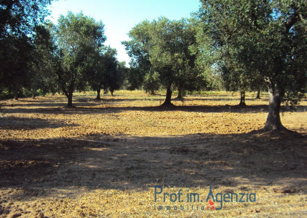 Sale Land plots with centuries-old olive groves S. Vito dei N. - Excellent land flat with centuries-old olive grove and fruit trees Locality Agro di San Vito dei Normanni