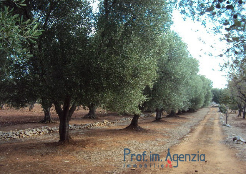 "Sale Farm houses Ostuni - Beautiful ancient country house with stone forecourt in ""original stone"" Locality Agro di Ostuni"