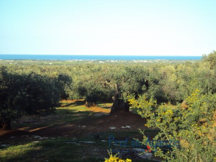 Wonderful plot of land sea view cultivated with old centuries olive groves