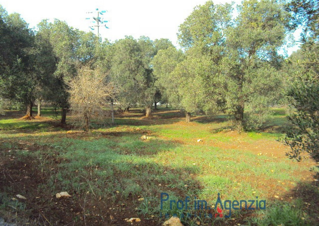 Sale Land plots with centuries-old olive groves Ostuni - Land with olive trees of about 12.000 sqm Locality Agro di Ostuni