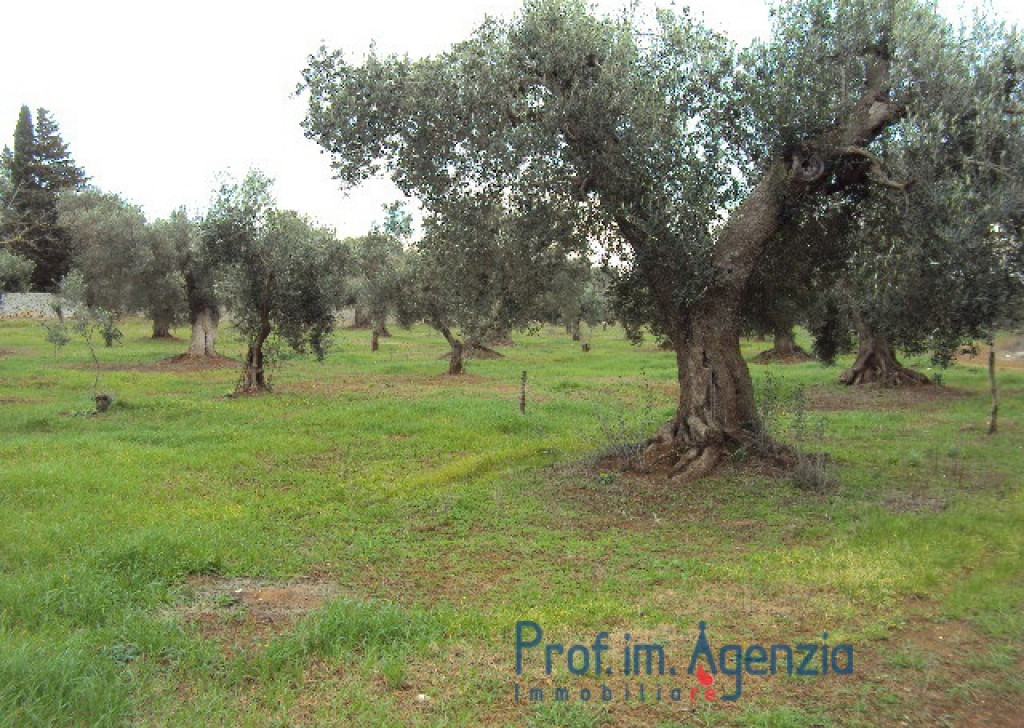Sale Land plots with centuries-old olive groves Carovigno - Panoramic land with centuries-old olive trees  Locality Agro di Carovigno