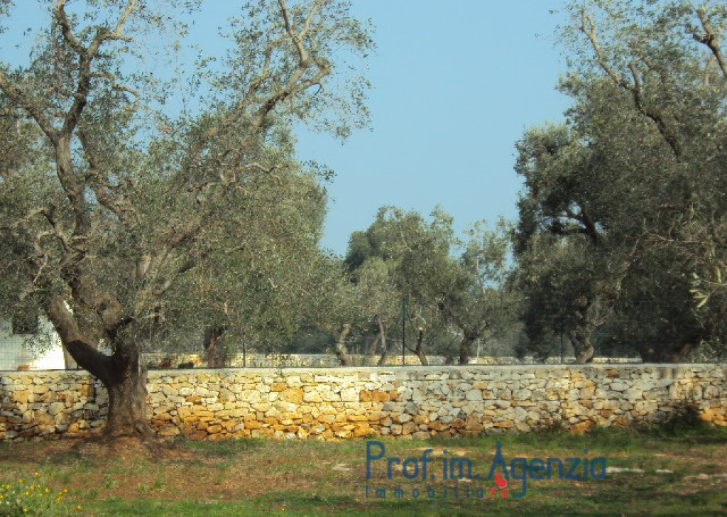 Sale Sea view plots of land Carovigno - Beautiful Plot of land with centuries old olive grove fenced from a dry wall stone  Locality Agro di Carovigno