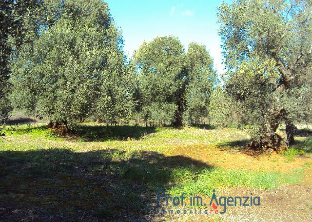 Sale Sea view plots of land S. Vito dei N. - Very large Plot of land sea view with centuries-old olive grove and little lamia in stone. Locality Agro di San Vito dei Normanni
