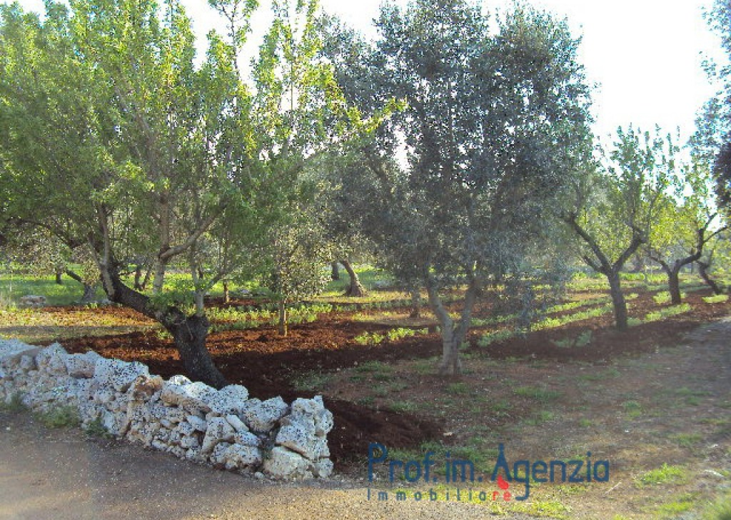 Sale Plots of land Carovigno - Splendid olive grove and almond trees with possibility to build up to 100 sq m with veranda and pool Locality Agro di Carovigno