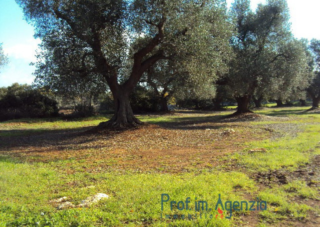 Sale Plots with building permit  Carovigno - Land with approved project Locality Agro di Carovigno