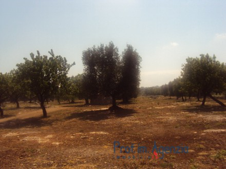 Wonderful plot of land sea view with olive grove orchard and tank.