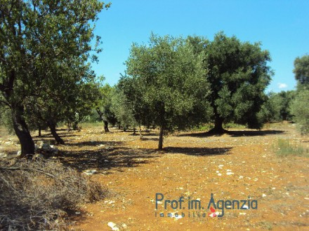 Interesting plot of land cultivated with olive grove and almond trees with approved project for two villas