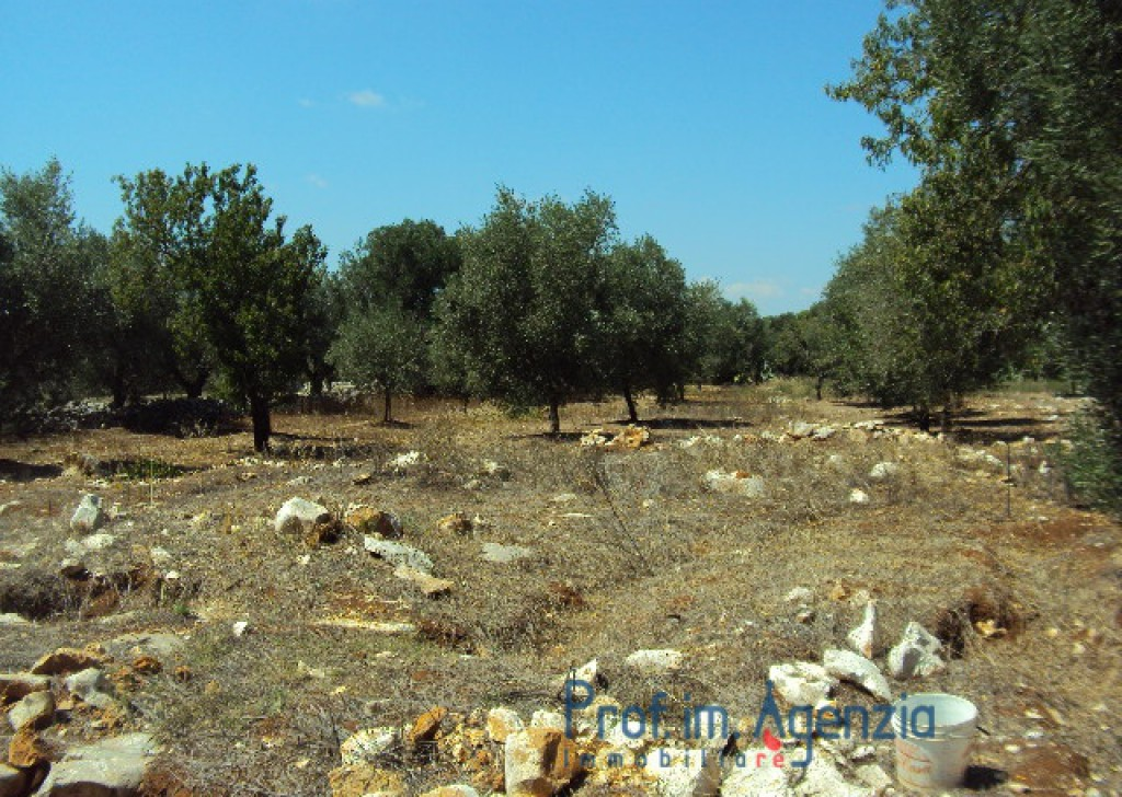 Sale Plots with building permit  Carovigno - Interesting plot of land cultivated with olive grove and almond trees with approved project for two villas Locality Città di Carovigno