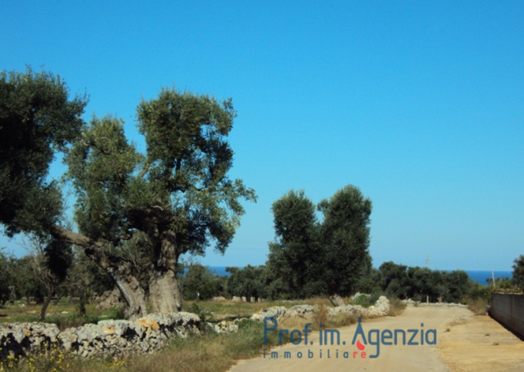 Sale Sea view villa Carovigno - Sea-view land with a project for a villa with pool  Locality Agro di Carovigno