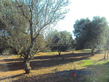 Beautiful land with sea view and olive grove and some plants of almond trees located in a unpolluted area