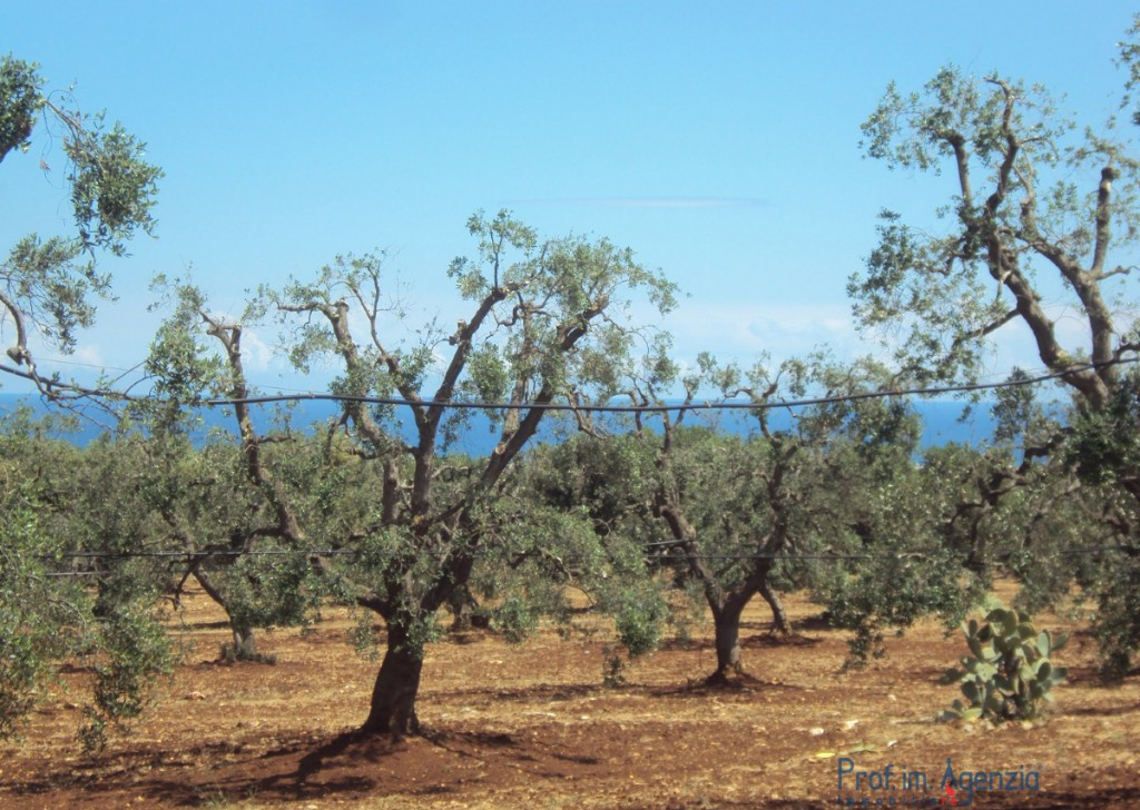 Sale Sea view plots of land Carovigno - Land with sea view Locality Agro di Carovigno