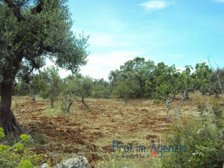 Land with olive grove