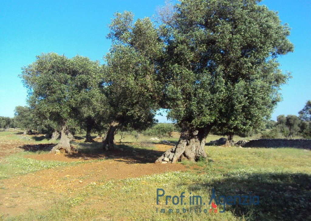 Sale Manor farms Carovigno - Farm of great historical and architectural value Locality Agro di Carovigno