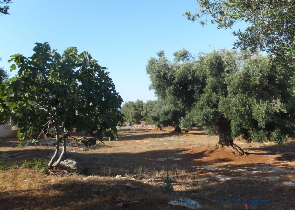 Sale Plots with building permit  Carovigno - Beautiful land with plan permission Locality Agro di Carovigno