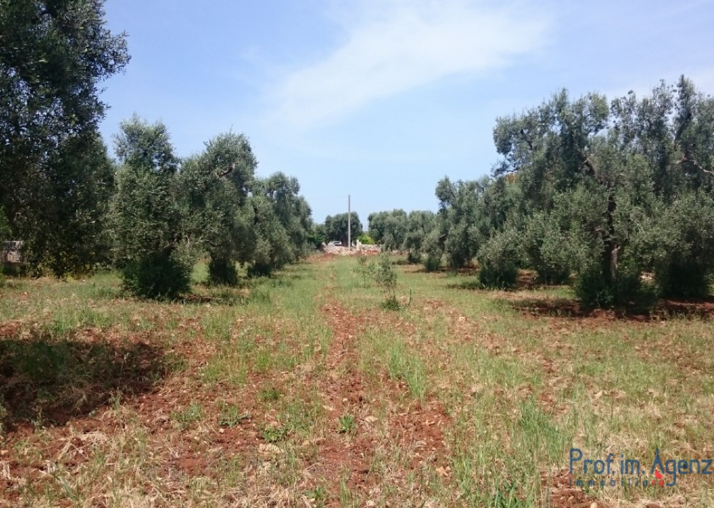 Sale Land plots with centuries-old olive groves S. Vito dei N. - Beautiful flat land  Locality Agro di San Vito dei Normanni