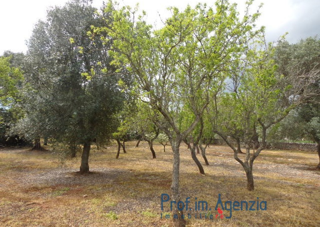 Sale Plots of land Carovigno - Beautiful level land Locality Agro di Carovigno