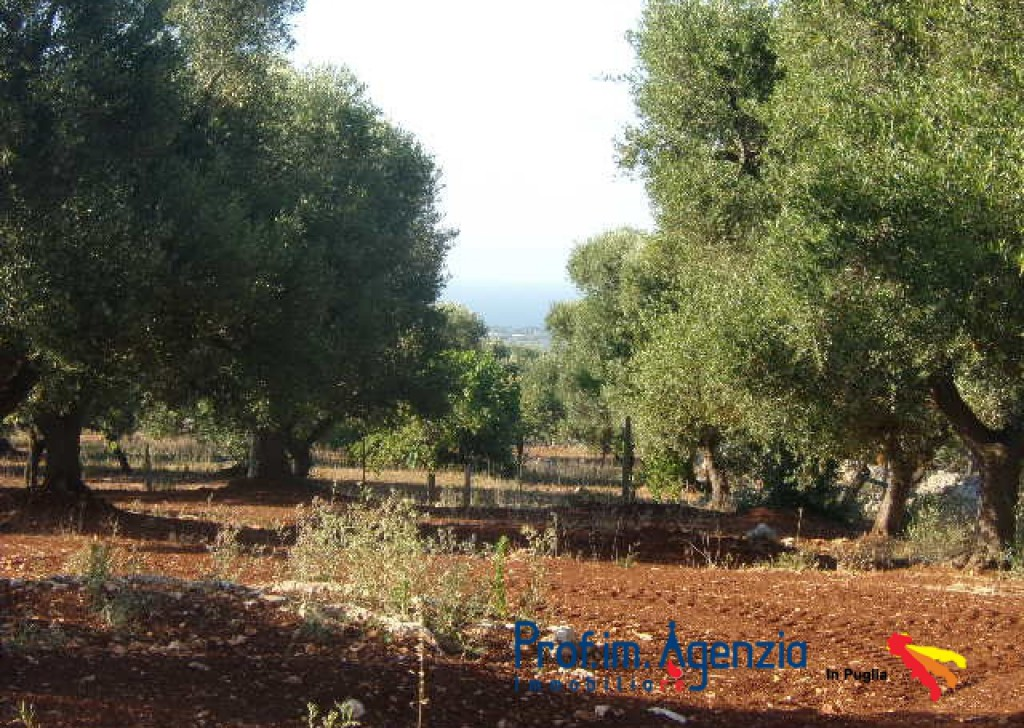 Sale Sea view plots of land Carovigno - Sea view land with approved project, with the possibility of buying keys in door Locality Agro di Carovigno