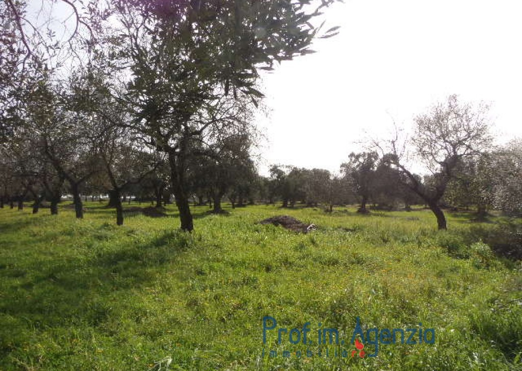 Sale Farm houses S. Vito dei N. - Beautiful farmhouse with typical vaults, composed of 3 rooms Locality Agro di San Vito dei Normanni