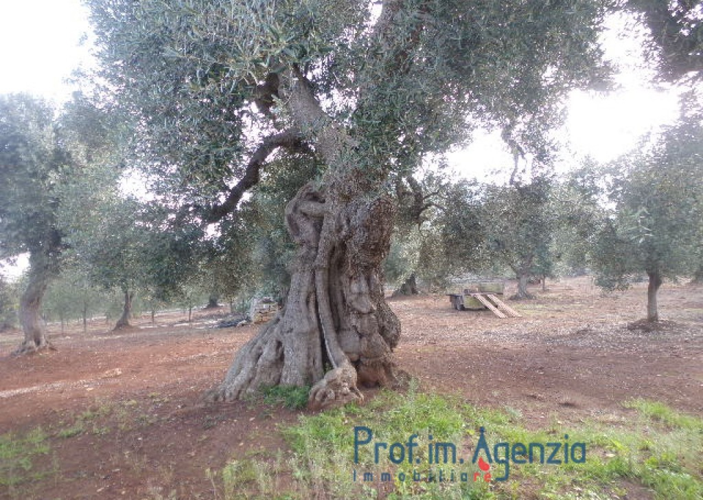 Sale Farm houses Ostuni - Wonderful ancient stone cottage located between thousand-year old  Locality Agro di Ostuni