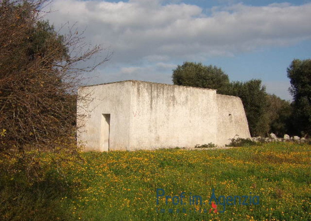 Sale Cottages Carovigno - Interesting lamia located on a wide land cultivated with old-centuries olive groves Locality Agro di Carovigno