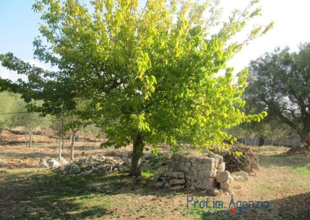 Sale Farm houses Ostuni - Farm house Locality Agro di Ostuni