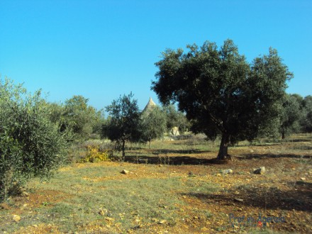 Fascinating plot of land with sea view,olive grove, orchard vestiges of trullo and tank