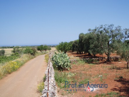 Beautiful sea view plot of land, with an old-centuries olive grove.
